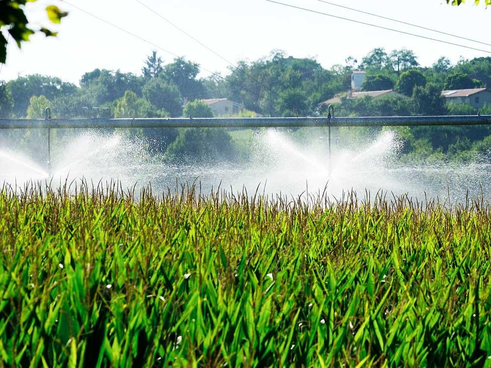 eau brute arrosage champs