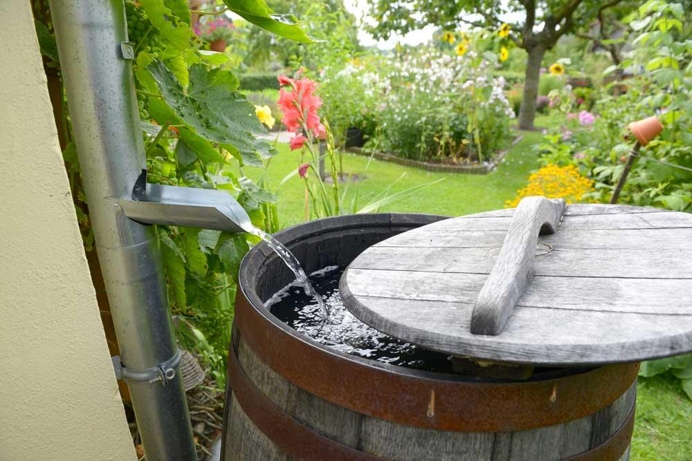 récupérateur d'eau